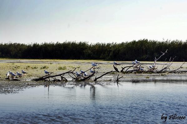 pasari-delta-dunarii-natura