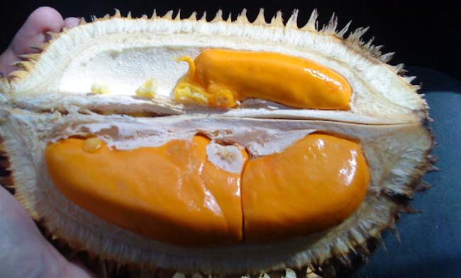 Durian Lai (Pampakin, Kalimantan) - www.jurukunci.net