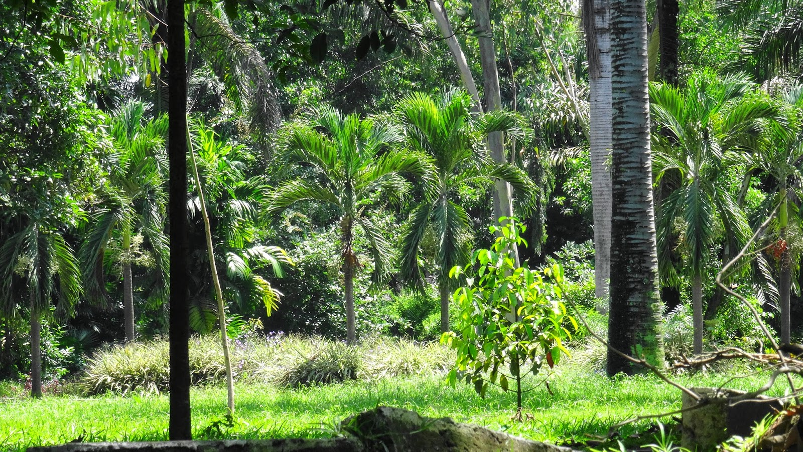 Mobembo na congo mars 2015 for Jardin zoologique kinshasa