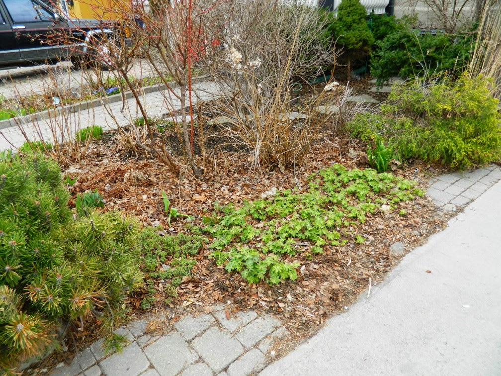 Paul Jung Gardening Services Toronto Leslieville spring garden cleanup before