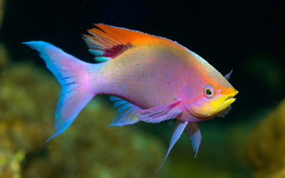 Beautiful Fishes Wallpaper