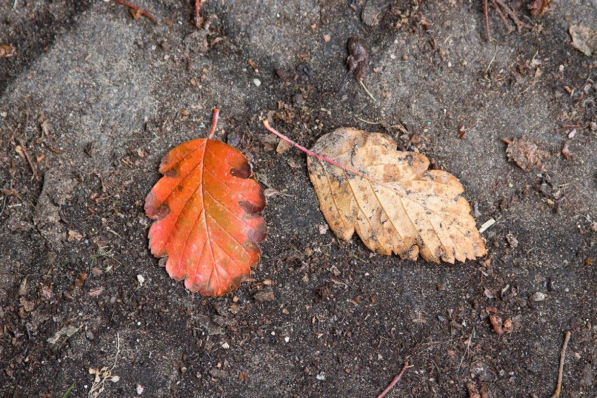 orange leaves on the street