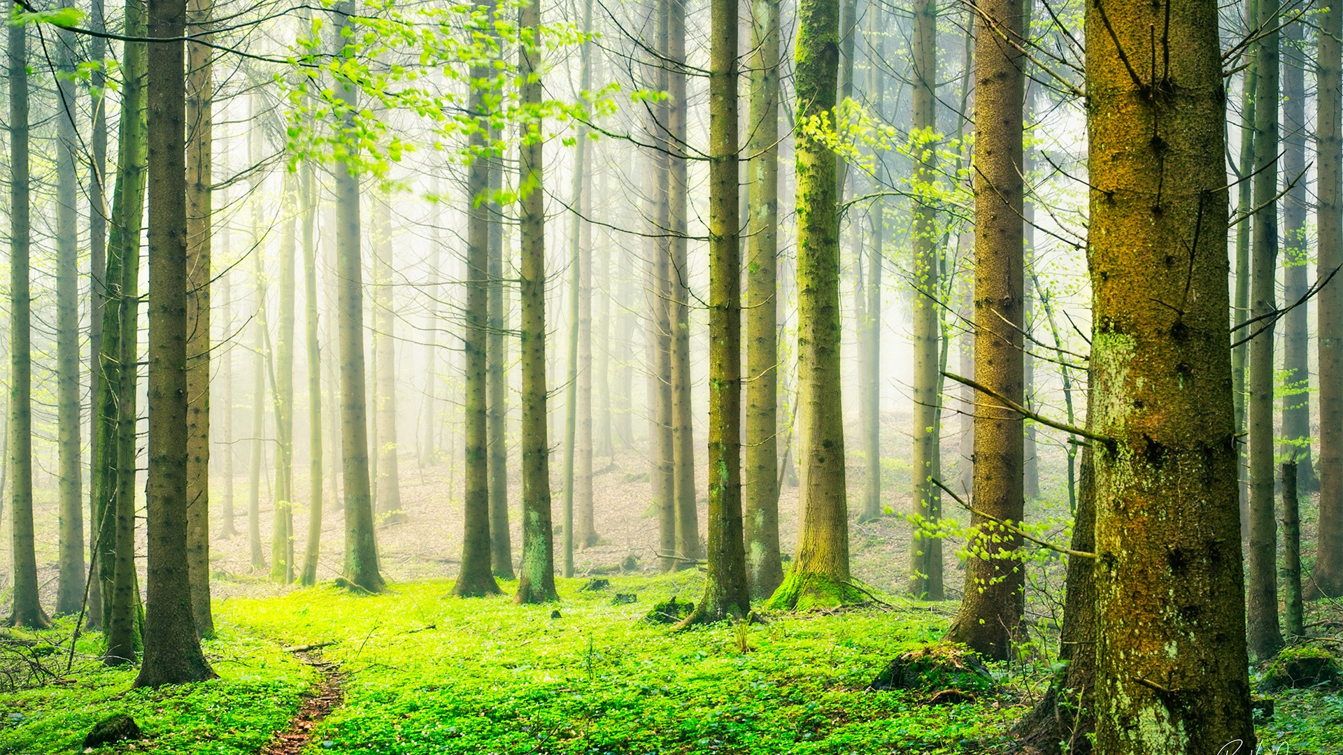 spring natural scenery hd - photo #15
