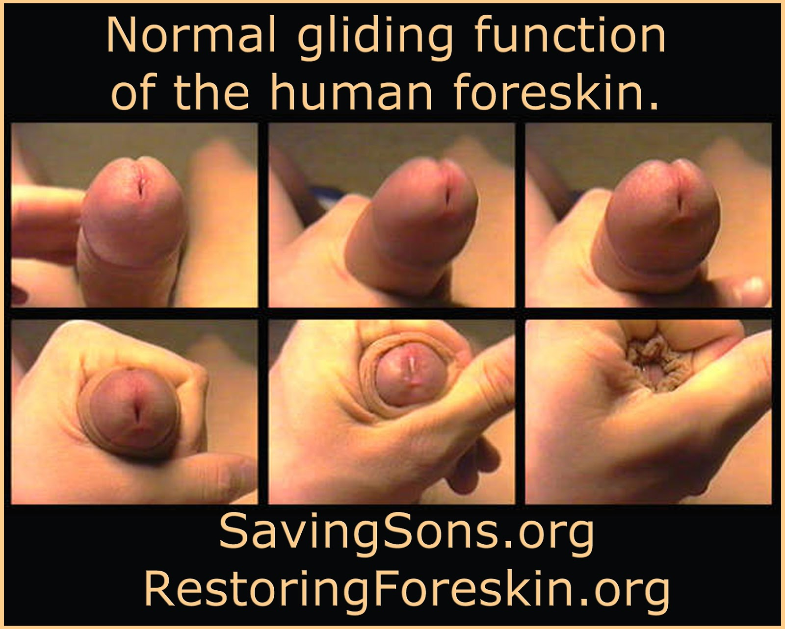 Foreskin in sex