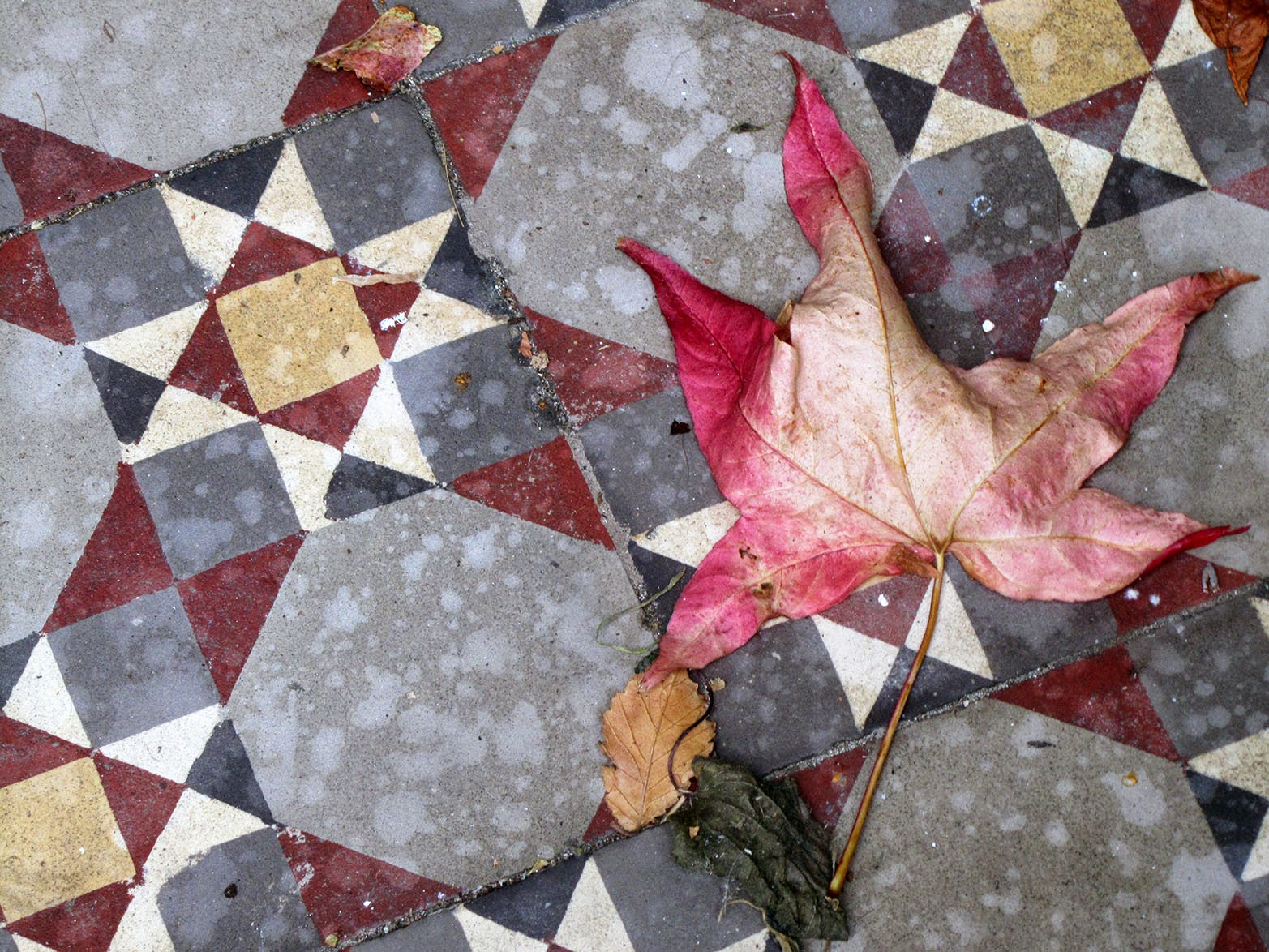pink leaf on tiled floor