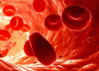 Eritrocitet,eritrociti