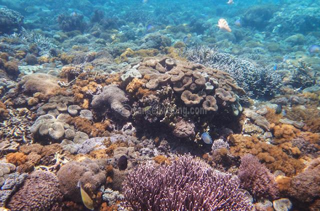 Pink beach, Soft Coral, blue Dot Sting Ray, Clown Fish, Labuan Bajo, Flores, Komodo, Rinca, Manggarai, Manta Point, 5.jpg