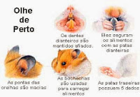 hamsters doenças