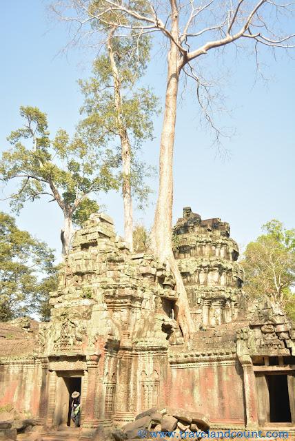 Famous Ta Phrom Tree