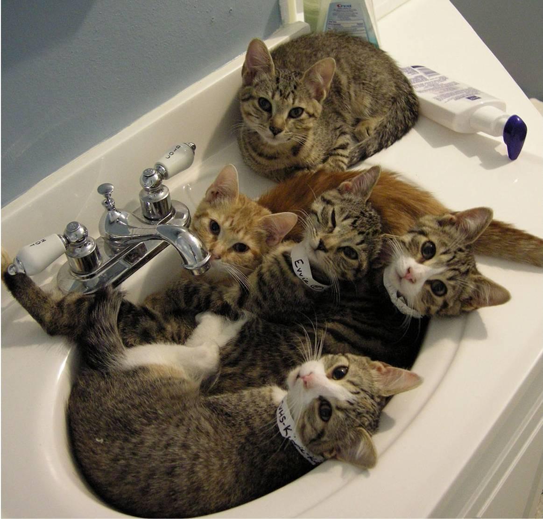 http://2.bp.blogspot.com/-1I_DusUMKhg/ULox6l4yA6I/AAAAAAAAB2Y/X2pBgXuPAfs/s1600/kittens+in+sink.jpg