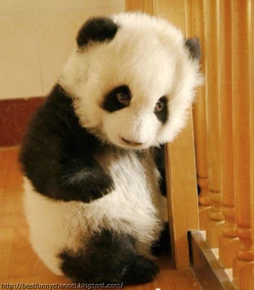 Cute little panda.