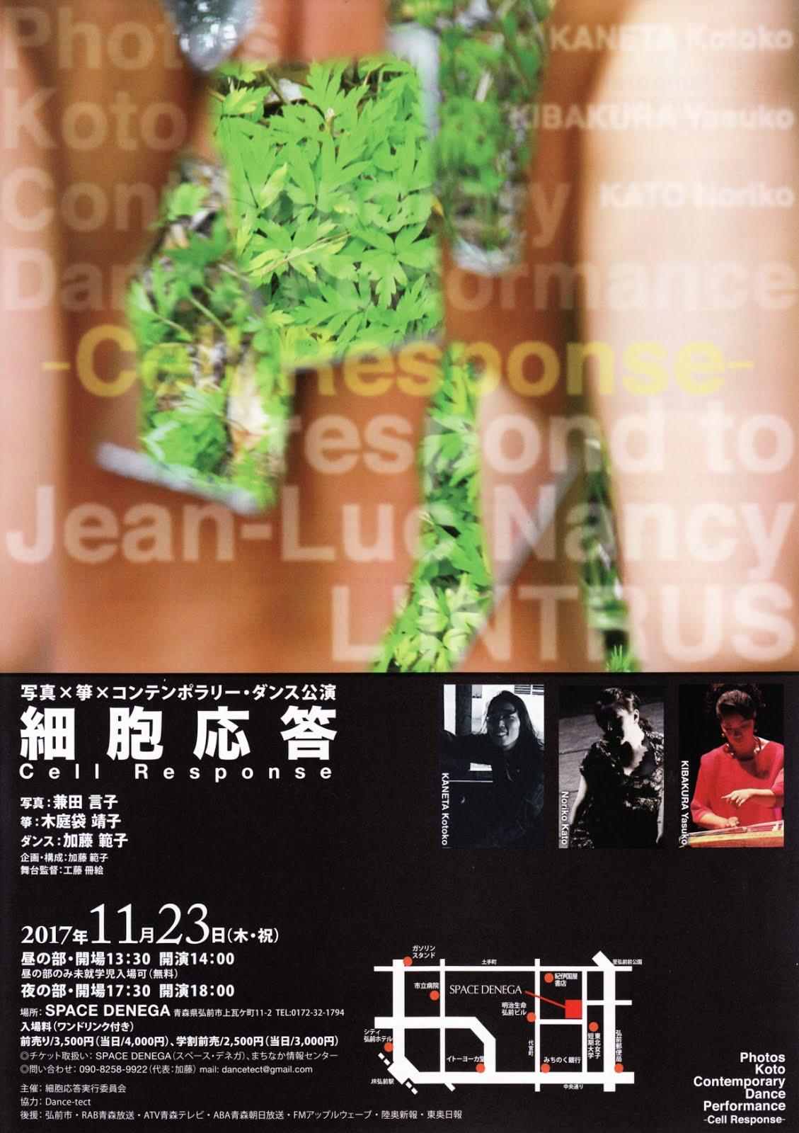 写真×箏×コンテンポラリー・ダンス公演「細胞応答」