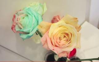 Κάνε τα φυσικά λευκά τριαντάφυλλα πολύχρωμα
