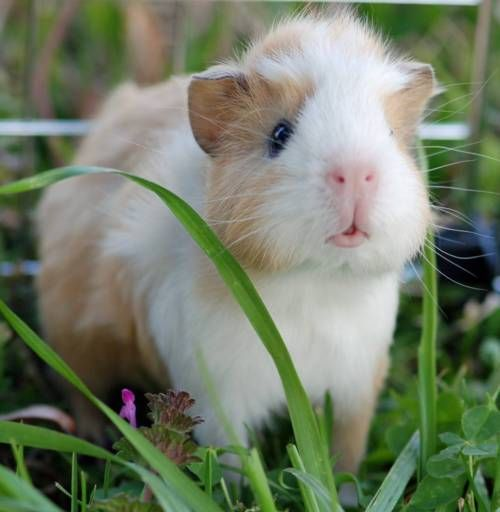 5 Popular Small Pets