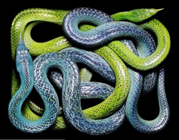 http://2.bp.blogspot.com/-1Jg22zIPVH0/TpbPgh4kVOI/AAAAAAAADAk/5Ry4DzlRQis/s1600/256708%252Cxcitefun-fascinating-snakes-05.jpg