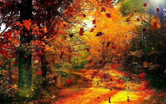 Autumn Wind6