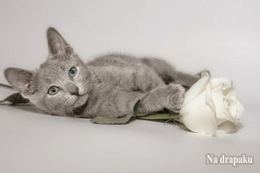 Przepuklina pępkowa u kotów