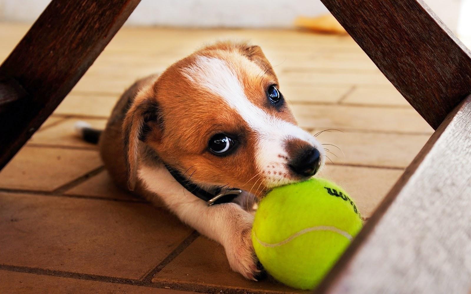 Puppy ojos