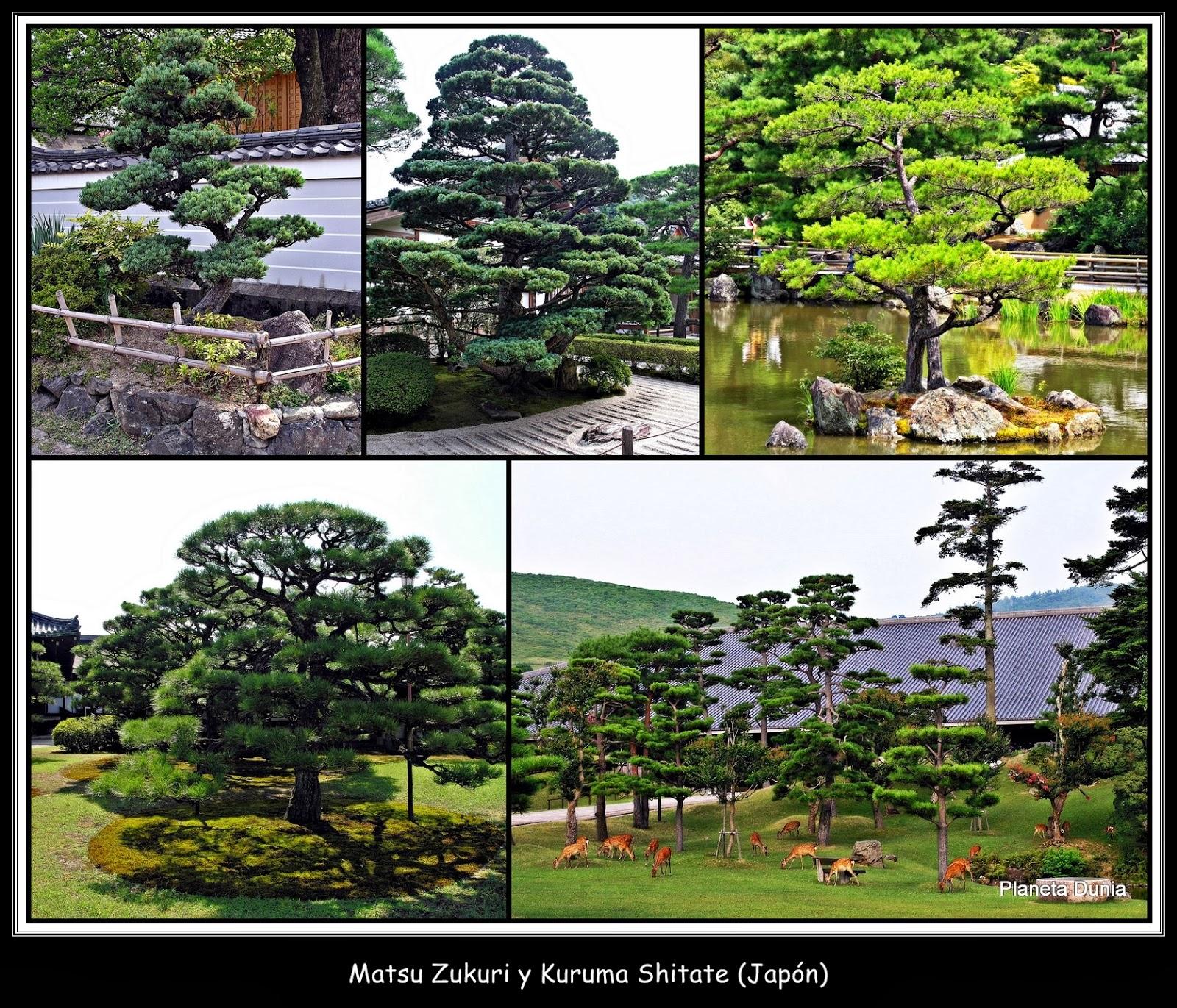 Planeta dunia rboles de un jard n japon s for Arboles jardin japones