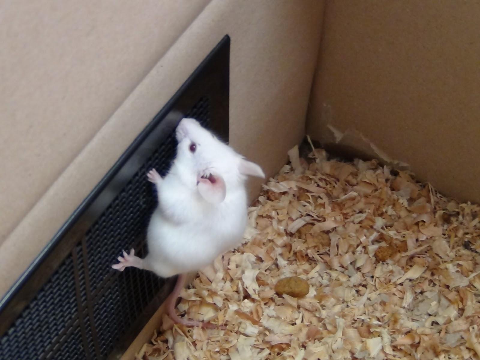 ネズミの画像 p1_35