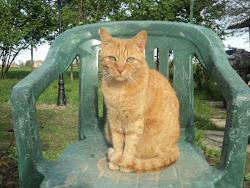 Garfield Abate Romualdo detto Gaffy