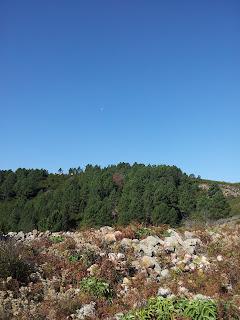 sur les crêtes ouest d'Aullène en Alta Rocca