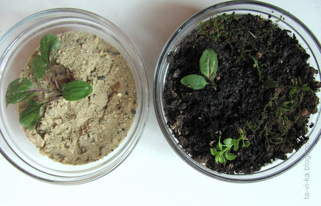 влияние почвы на рост растений - эксперимент