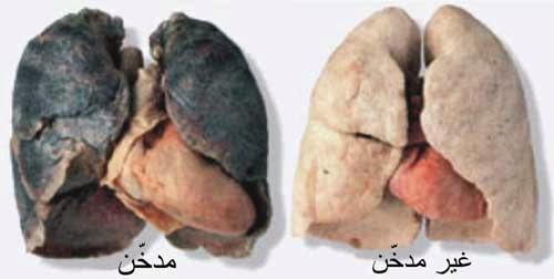 هل تعلم ان هناك طعام ينظف الرئة من أثار التدخين ! .. تعرف عليه من هنا