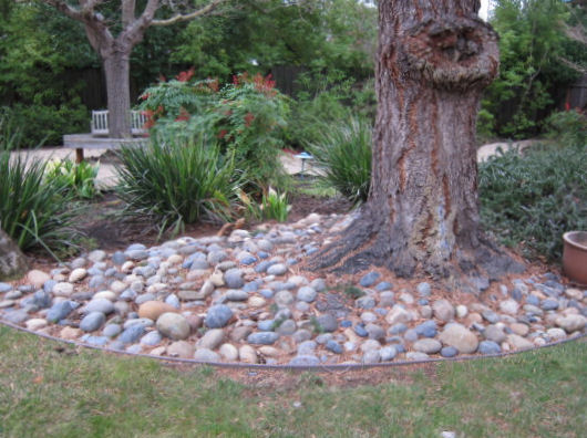 Rock Landscaping Under Trees : That placing rocks around a tree like this is not good for the