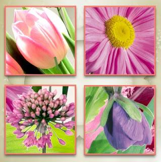 SPRING FLOWERS - CU Cajoline_springflowerscu_zoom