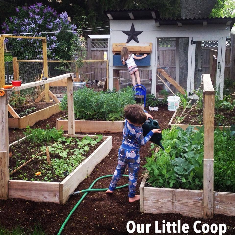 urban farm, backyard chickens, urban homestead, back to basics