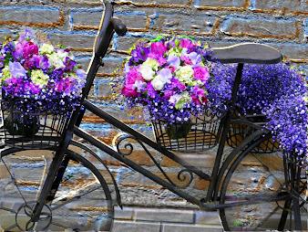 #31 Bikes Wallpaper