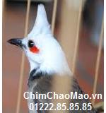 Chim Chao Mao, Chim Chao Mao Mo
