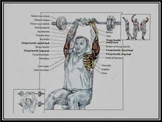 Seated EZ Bar Triceps Extension