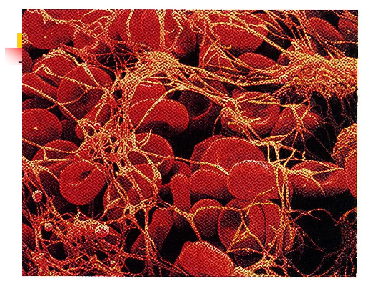 Fisiologia Humana Basica: HEMOSTASIA: TABLA DE MOLECULAS Y ...