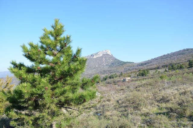 Vue sur la montagne de Buègue