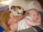 American Pitbull Dogs hd Wallpaper