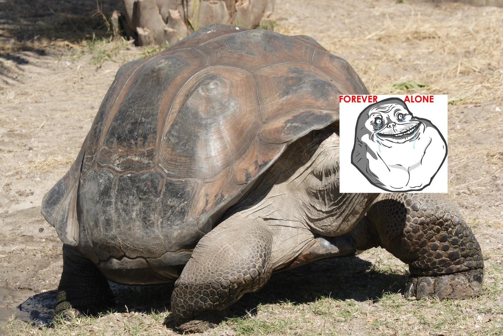 http://2.bp.blogspot.com/-1No01wkPsnM/TwwuboUX0hI/AAAAAAAAAmE/5gw173_Cefg/s1600/Galapagos_giant_tortoise_Geochelone_elephantopus2.jpg