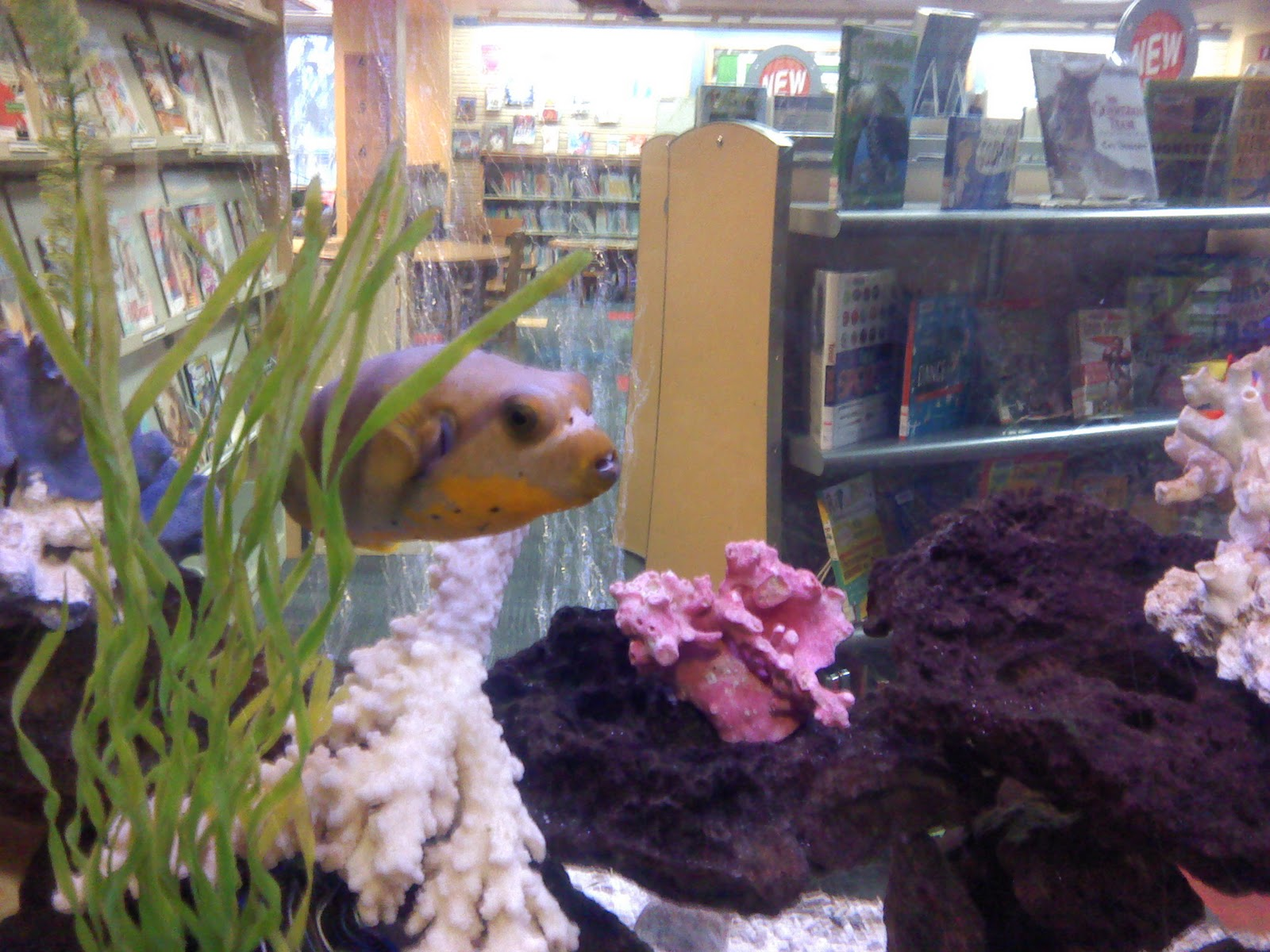 Freshwater aquarium fish library - Aside From All The Book They Had Some Nice Learning Toys As Well