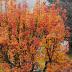 I Love Autumn~