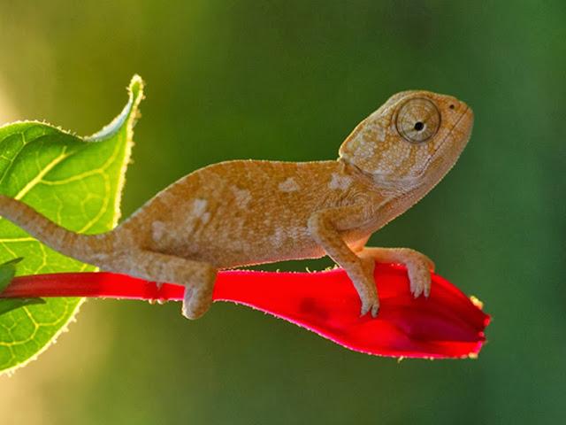 "<img src=""http://2.bp.blogspot.com/-1OSb-Nquyd4/UrAUv6_tTgI/AAAAAAAAF0g/QaSViyYCOtE/s1600/hf5.jpeg"" alt=""Reptiles Animal wallpapers"" />"