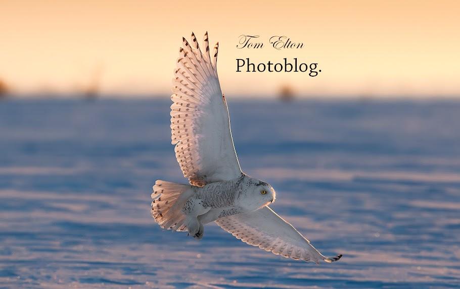 Tom Elton Fotoblogg