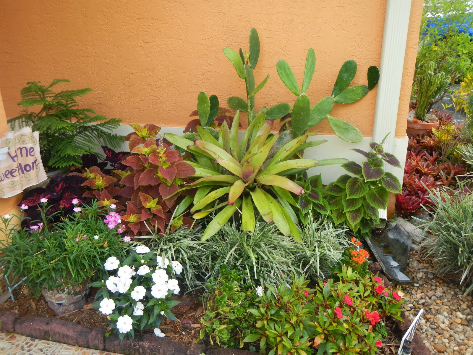 DragonFly Garden A mix of bromeliads succulents and