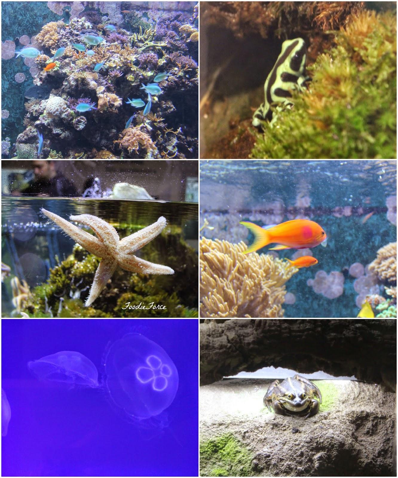 Horniman aquarium
