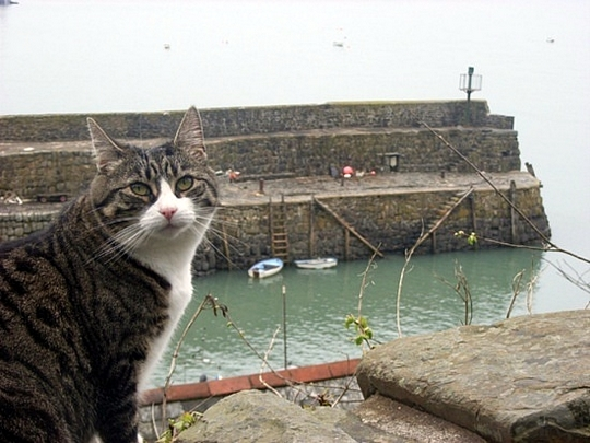 Cat from Clovelly, England