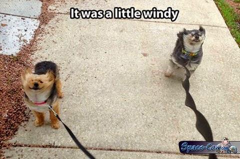 funny animals dogs pics