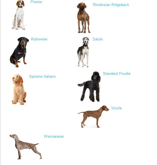 Dog Food For Skinny Dogs