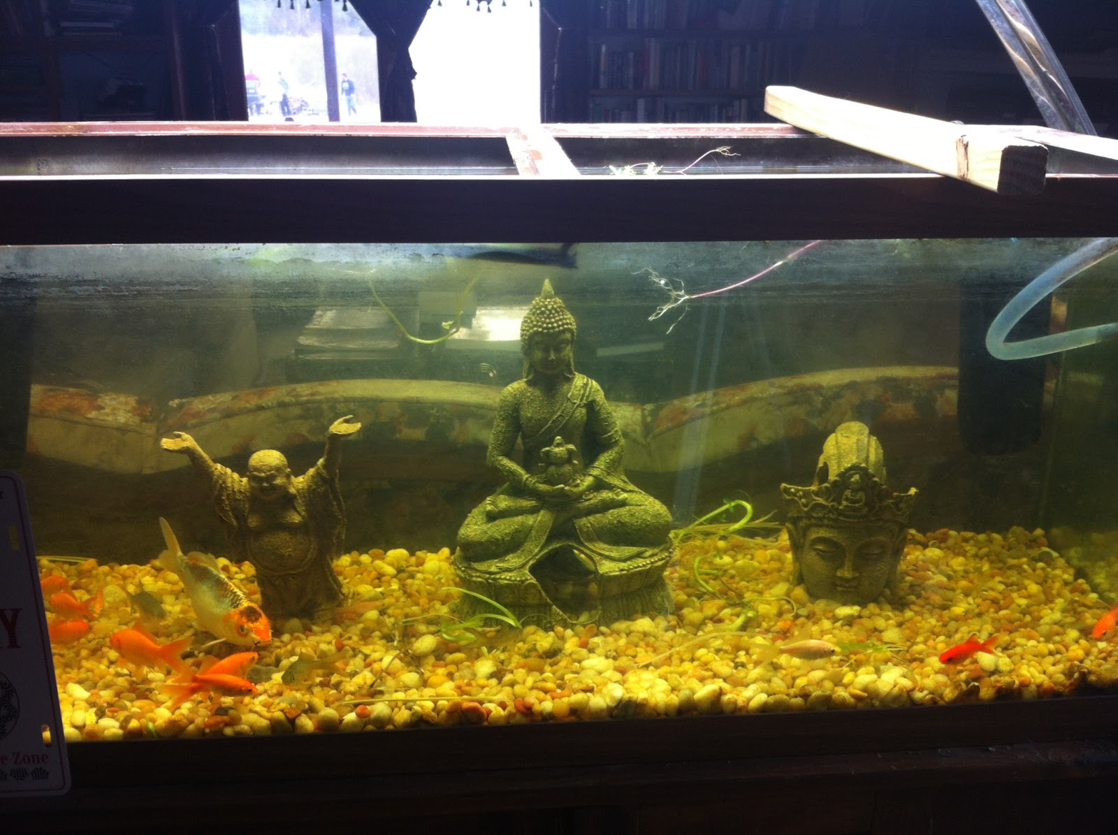 Fish tank bed 28 images bedroom fish tank photos and for Fish tank bed
