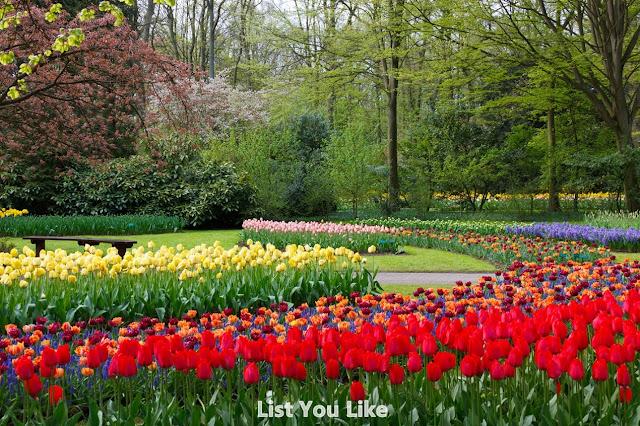 The Garden Keukenhof - Netherlands