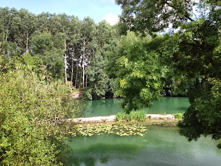 nature, water, trees, leaves, summer